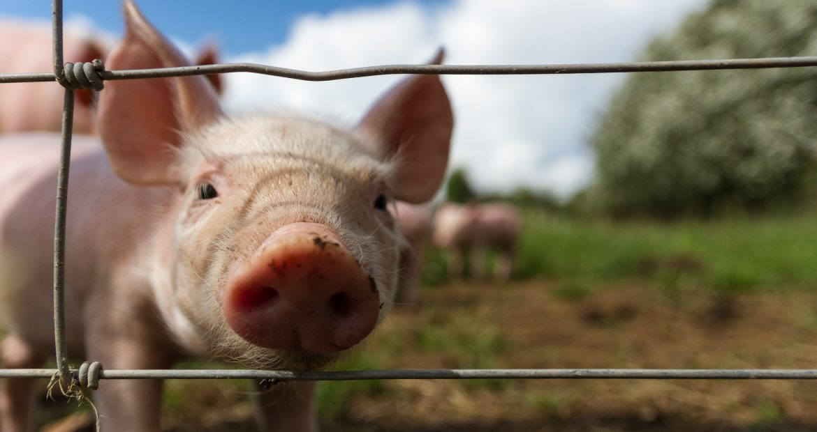 """""""You Can't Murder Someone Nicely"""": An Interview on Animal Rights in the Liberty Movement"""