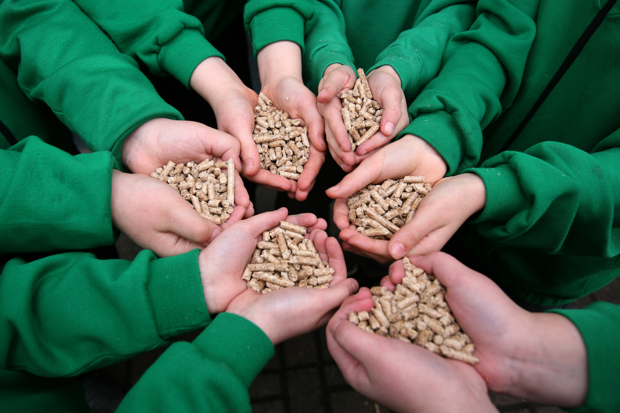 If the EU Burdens Biomass, the Environment Loses