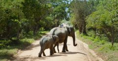 Safarisource: The Airbnb for Safaris cuts out the middle-man