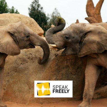 Legalise the Ivory Trade – Saving Africa's Icons