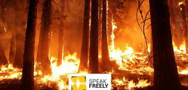 Data on Amazon Rainforest Fires Tell a Much Different Story Than Social Media
