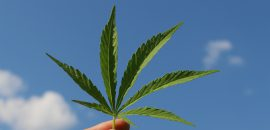 Cannabis: How N. Macedonia Leans Towards Legalization
